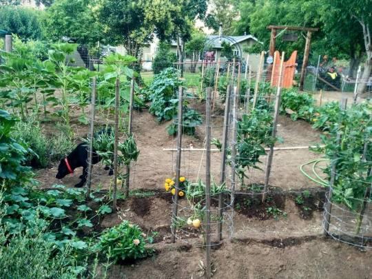 green acres garden 4