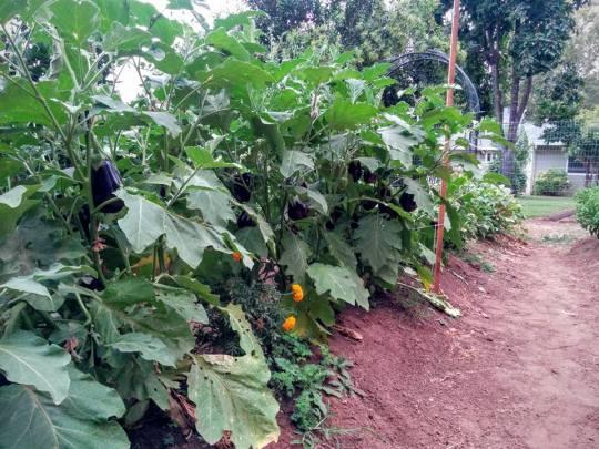 green acres garden 5