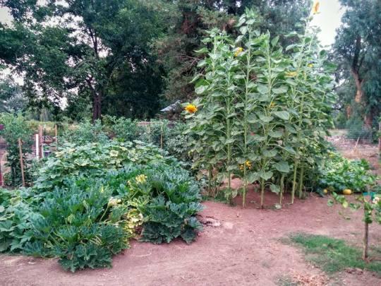 green acres garden 6